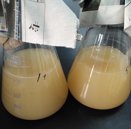 浓缩液体己酸菌